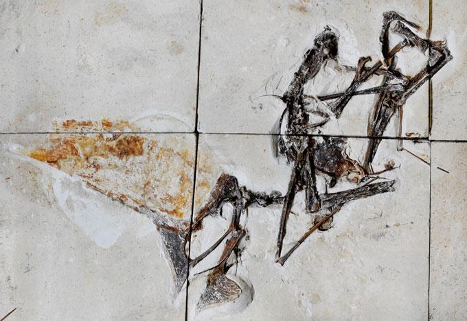 化石の保存された石板は6枚に切り分けられていた
