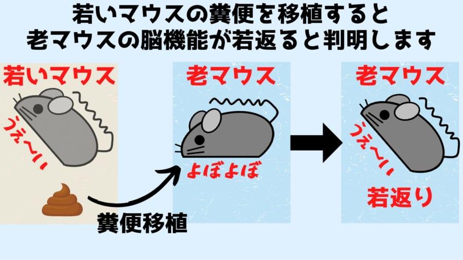 若いマウスの「うんち移植」で老いたマウスの脳が若返ると判明!