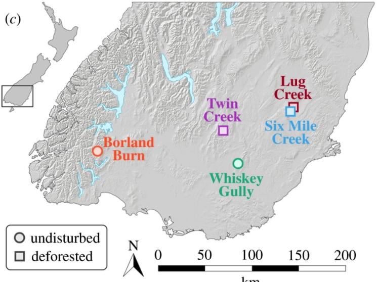 採集した5つの場所(丸は森あり、四角は森なし)