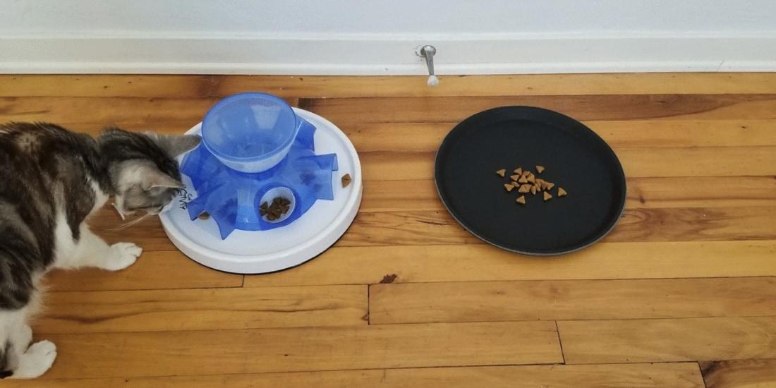ネコは他の動物と違い「タダ飯」を好む