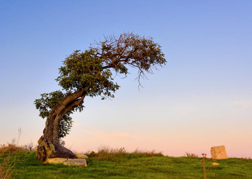 地球が円盤の場合、重力は北極に向けて働く。樹木も斜めに伸びることになるかも。