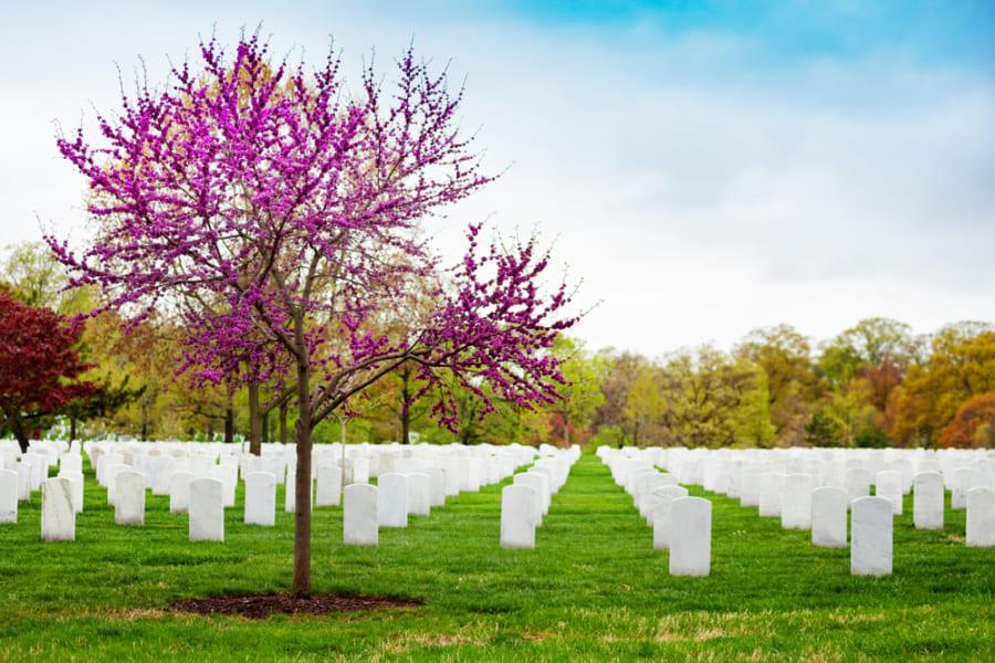 環境にやさしい埋葬が求められている
