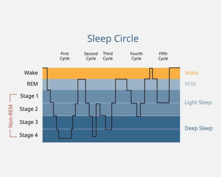 睡眠周期を表したグラフ