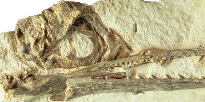 「鳥脳」をもつ者が、恐竜を絶滅させた隕石から生き延びたという研究