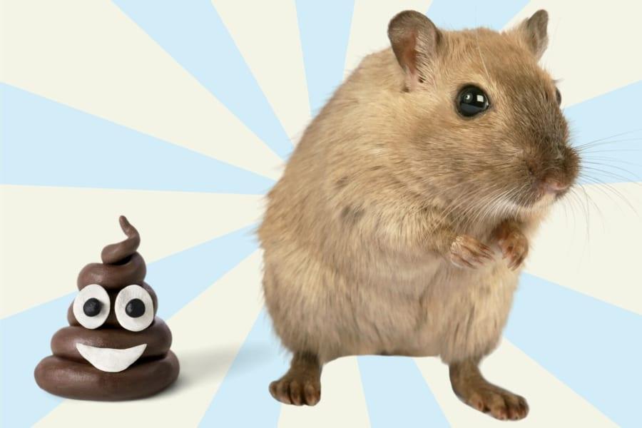 若いマウスの「うんち移植」で老いたマウスの脳が若返ると明らかに