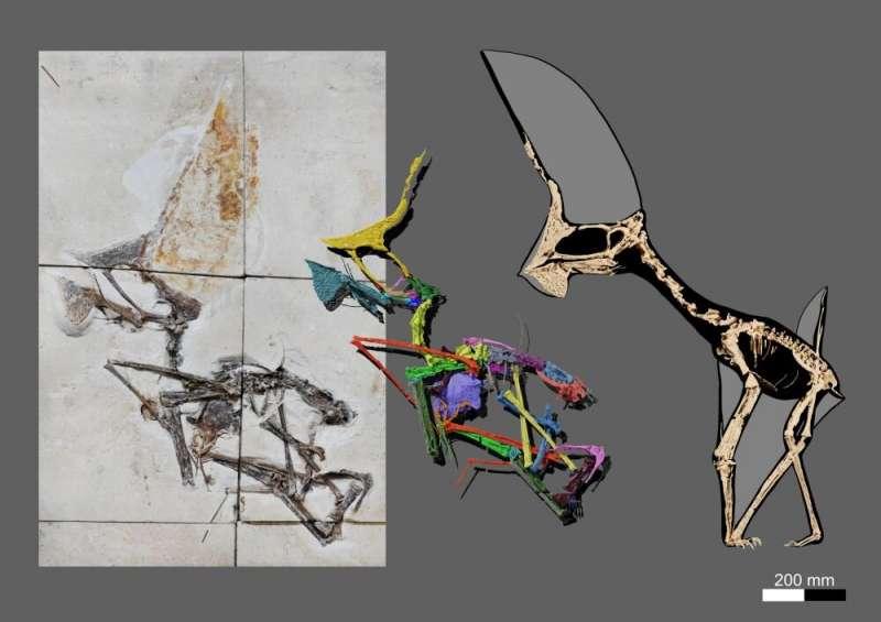 CTスキャンから骨格の全体像を復元