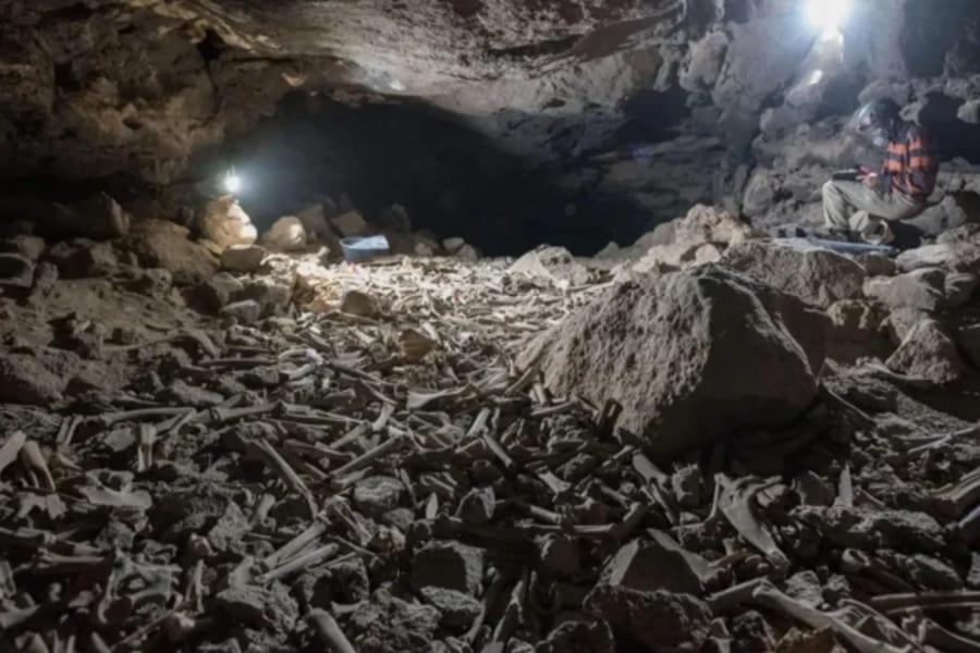 何十万もの白骨が散乱する「恐怖の洞窟」のヌシが明らかに!