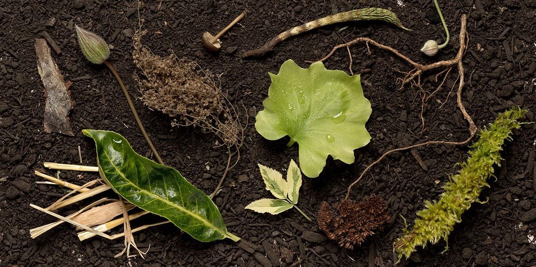 新しい埋葬方法「人間の堆肥化」