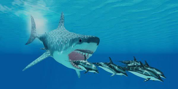 古代の巨大ザメ「メガロドン」は頭部だけで車の大きさ!?|ヘンテコ生き物図鑑