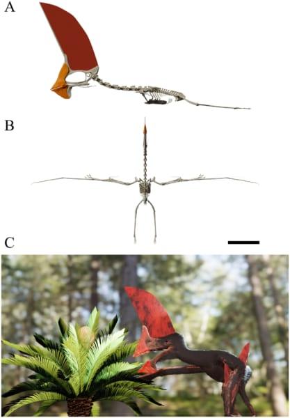 骨格の3D画像(A、B)と復元イメージ(C)