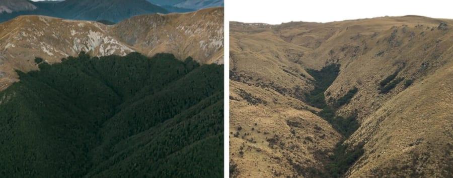 森林伐採により禿げ上がったエリア