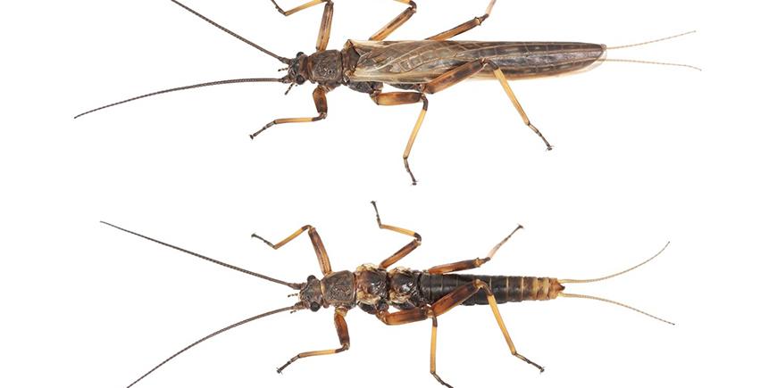 森林伐採により昆虫の翅がなくなっている⁈