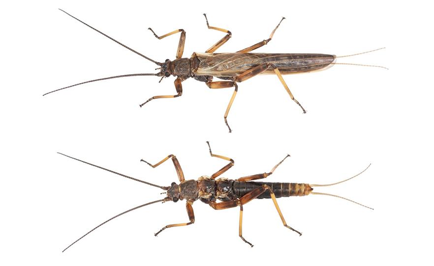 森林伐採により昆虫が「ハネなし」に進化し始めていると判明(ニュージーランド)