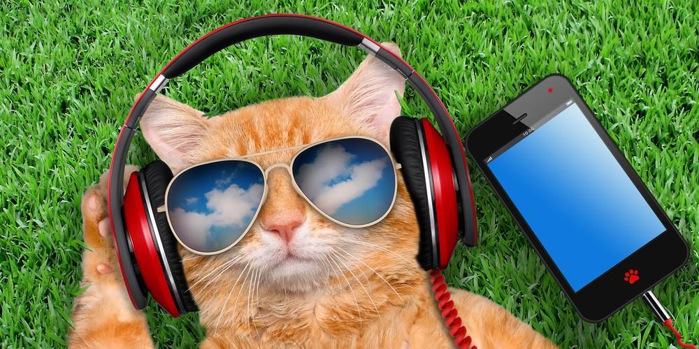 猫は飼い主の呼び声を分かって無視している