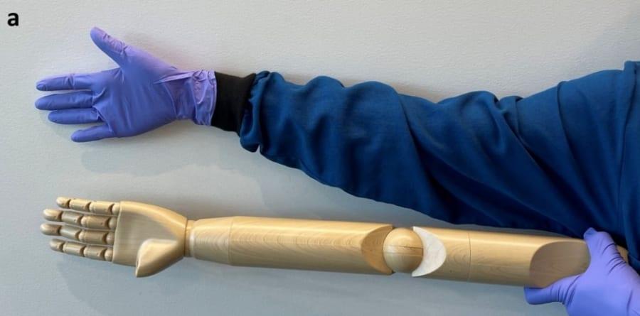 マネキンの腕のサイズを人間と比較した画像