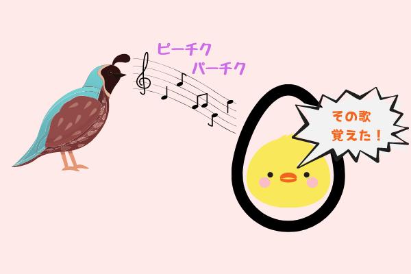 ヒナは親鳥の声を「卵の中から」学習していた