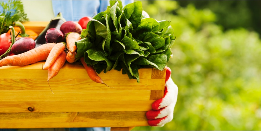 植物食で増加する「おなら」は健康のサイン