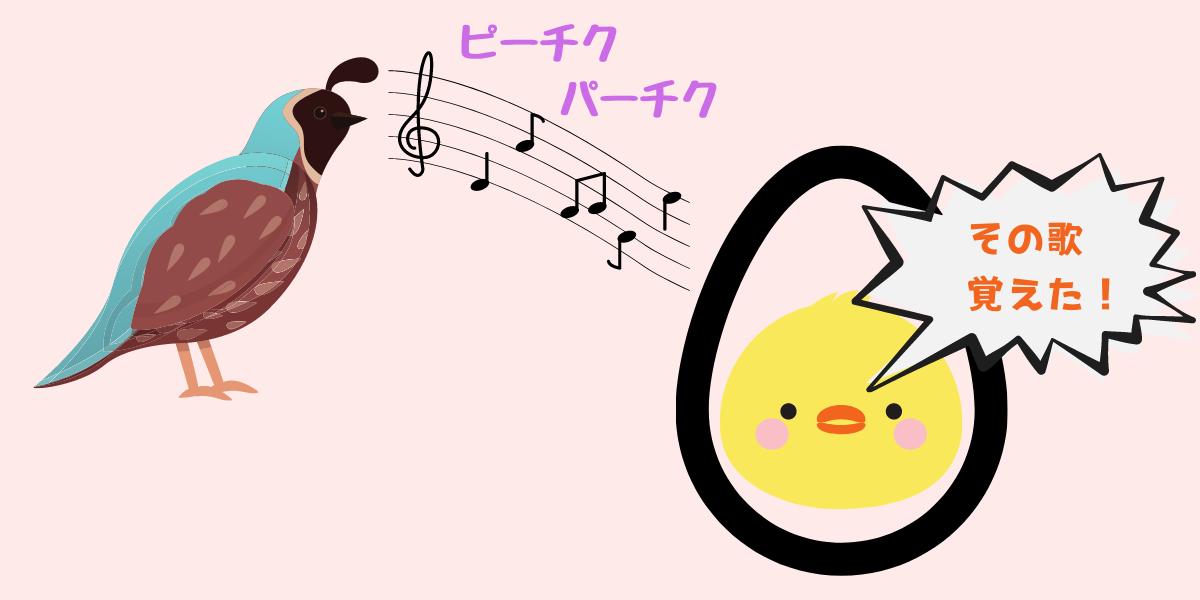 鳥のヒナは歌い方を卵の中で聞きながら学習していた
