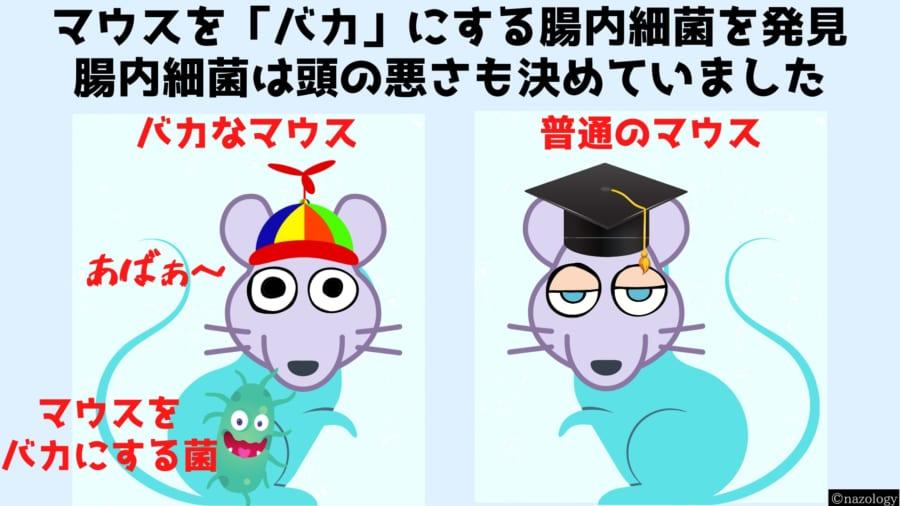 マウスを「バカ」にする腸内細菌を発見!