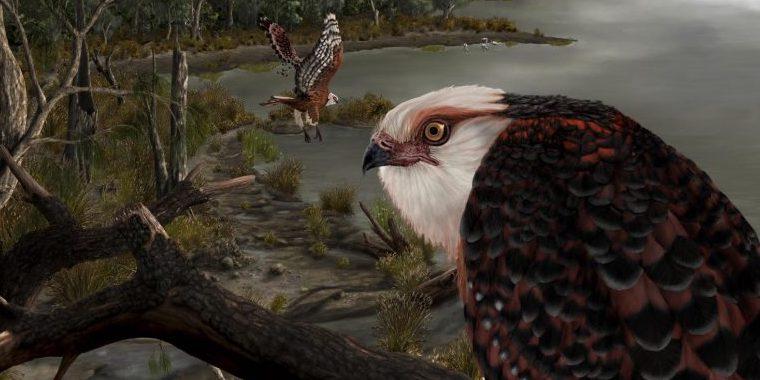約2500万年前の新種ワシを発見