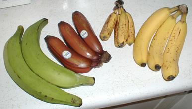 左から、プランテン、モラード、ラツンダン、キャベンディッシュ