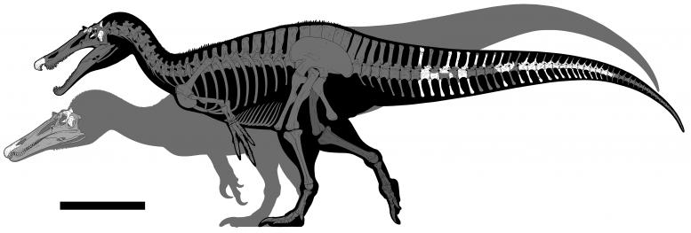 回収された化石の部位(白い部分)