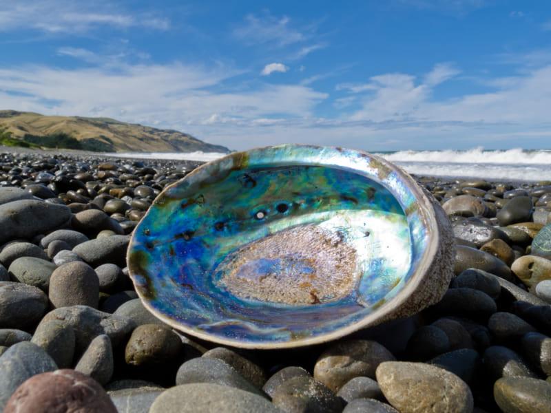 アワビの内側で虹色の光沢を放つ真珠層は優れた構造を持っている
