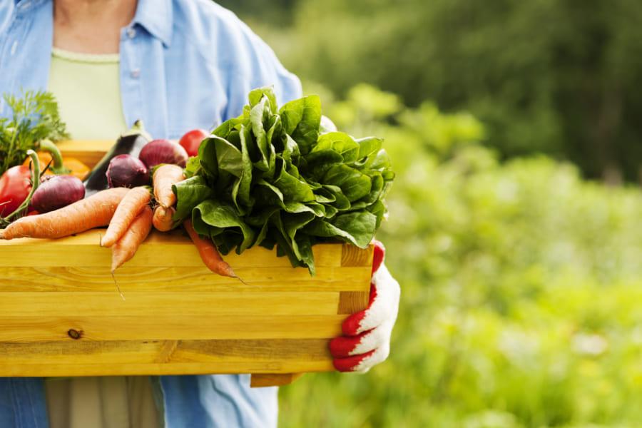 植物をよく食べるほど「おなら」の回数が増えると判明