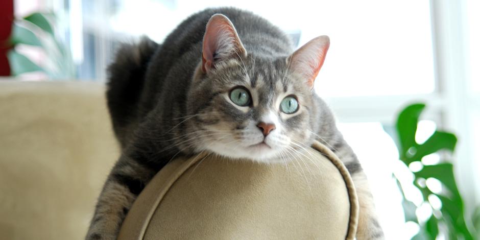 ネコの性格と行動特性は7つに分けられる
