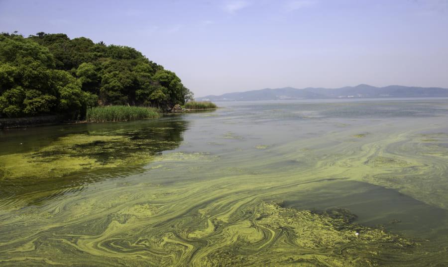 ペルム紀の大量絶滅は「現代の環境汚染に似ていた」可能性が高い