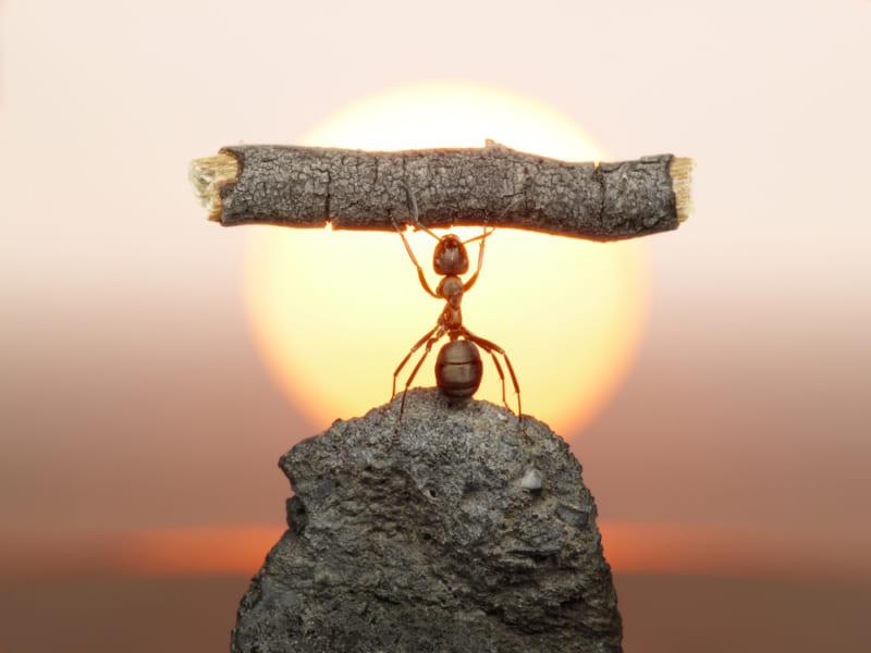 アリの歯は「亜鉛」で切れ味を鋭くしていた、原子レベルで配置を初観察