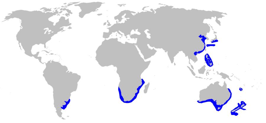 「フジクジラ」の分布域