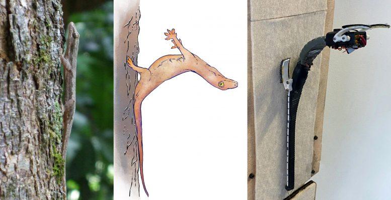 ヤモリは「尻尾に衝突のエネルギーを吸わせ」落下を防いでいた