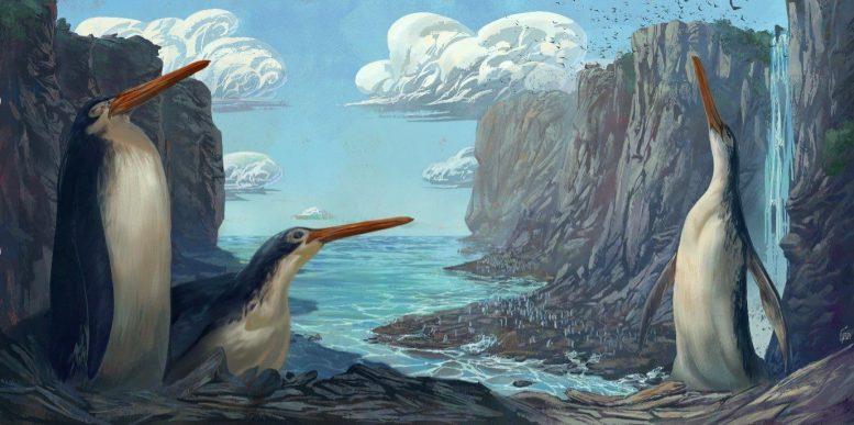 小学生が発掘した化石が、3000万年前の新種「足ながペンギン」と判明