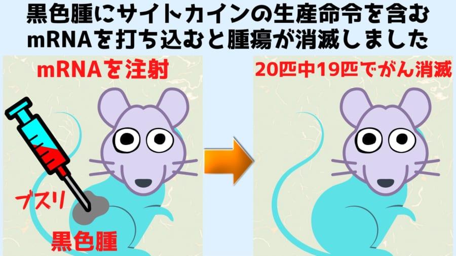 マウスの20匹中19匹で腫瘍が完全に消滅した