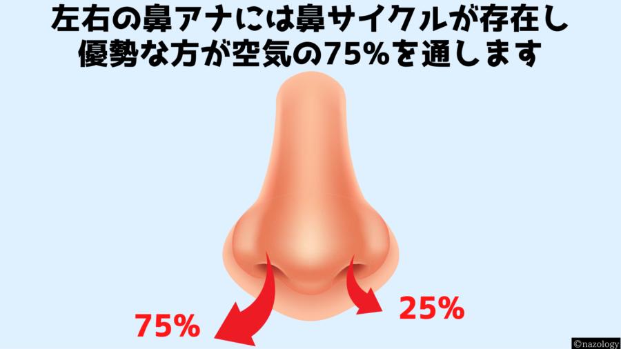 鼻呼吸は均等ではなく常に片方のアナが75%の空気量を通していると判明!