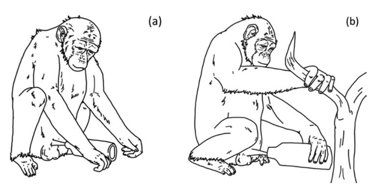 人工物を「性玩具」に使う野生チンパンジーを初確認