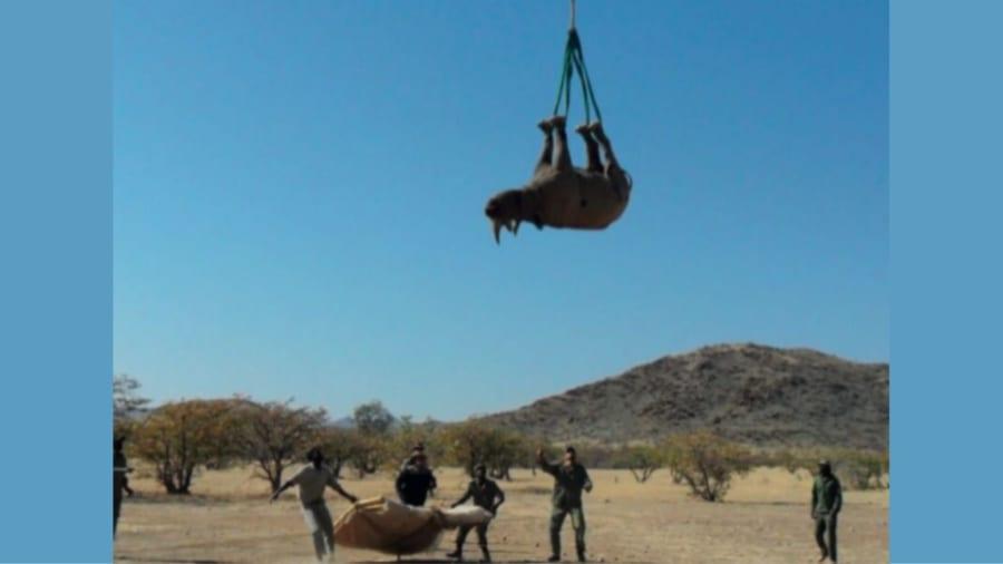 輸送賞:サイを空輸するには逆さ吊りがいい