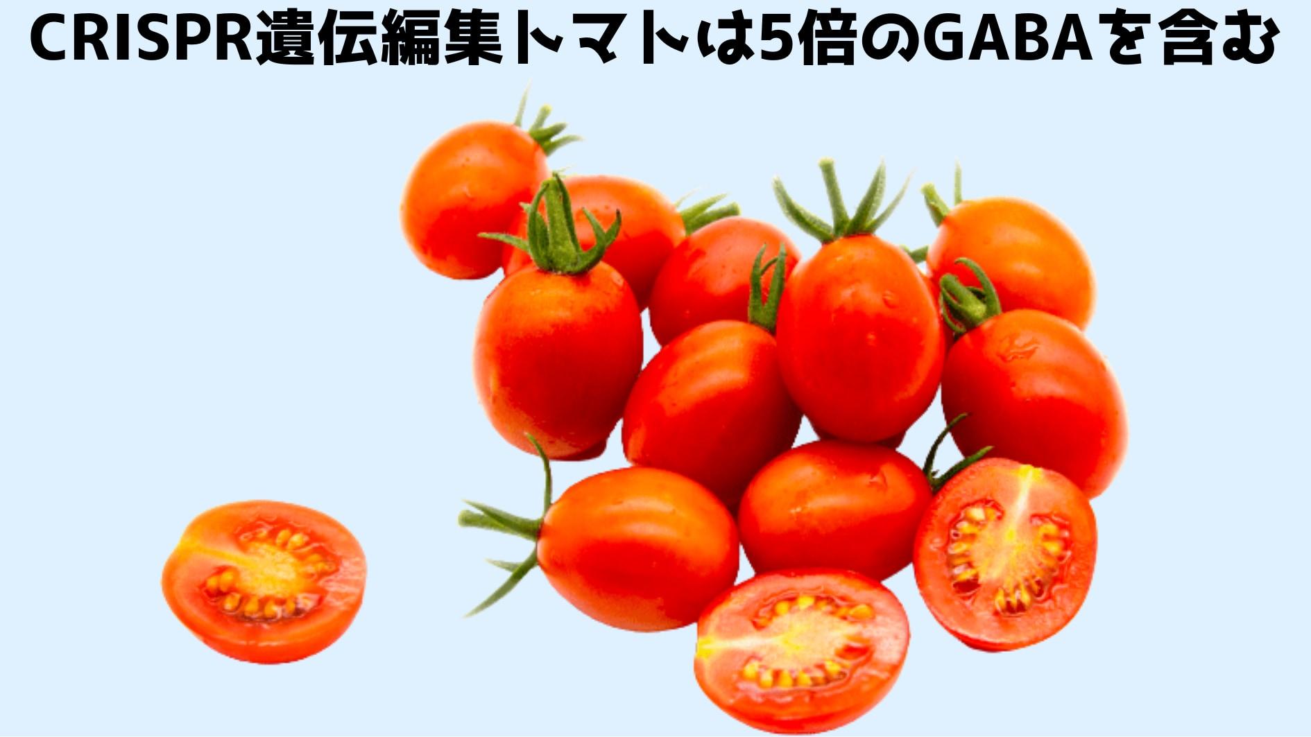 世界初! CRISPR遺伝編集トマトが日本で発売開始! 5倍のGABAを含有