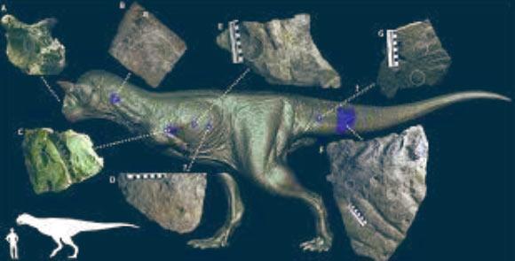調査されたカルノタウルスの皮膚化石