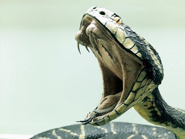 毒ヘビから抽出される「毒」の価値は?