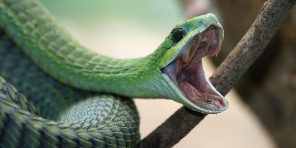 ヘビは隕石衝突の後に多様化していた