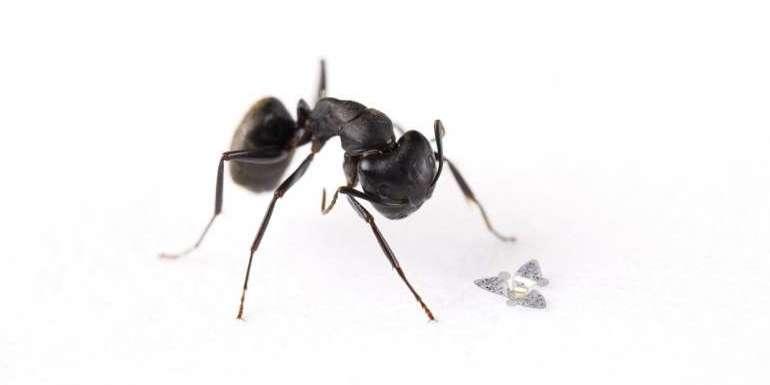 アリより小さな飛行体「マイクロフライヤー」が誕生