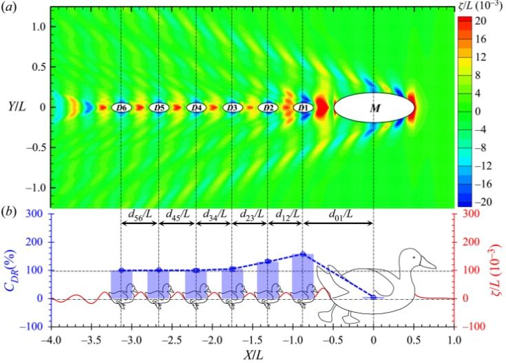 母ガモの後ろにできる波の力、下の青線は「抗力の減少」を示す