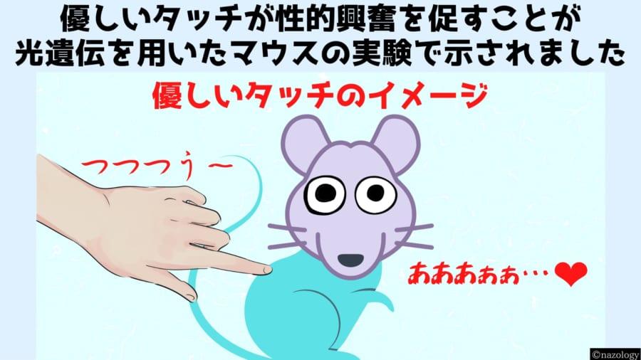 遺伝操作で「タッチ」の代わりに「青い光」で発情するマウスを作成!