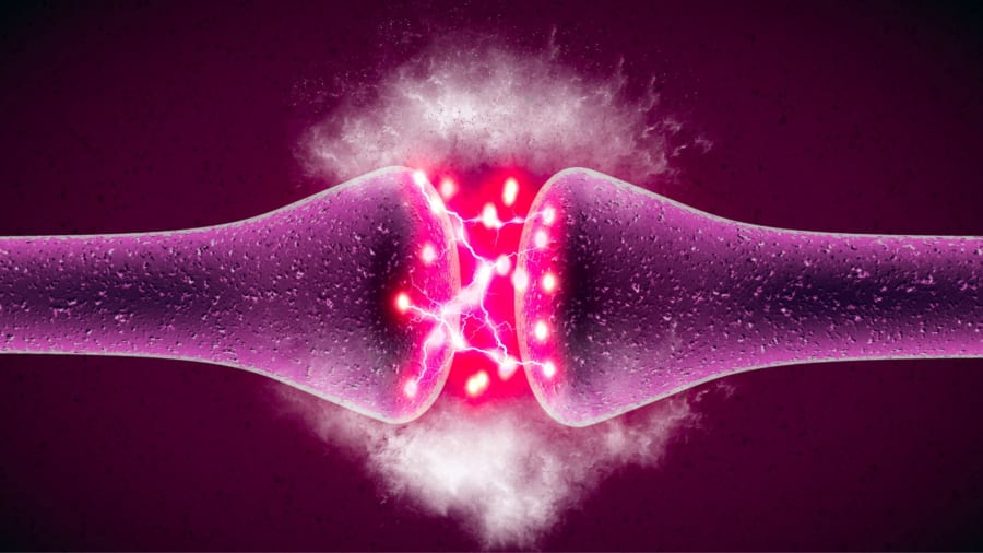 記憶喪失が起こるとき特定のタンパク質が分解していた