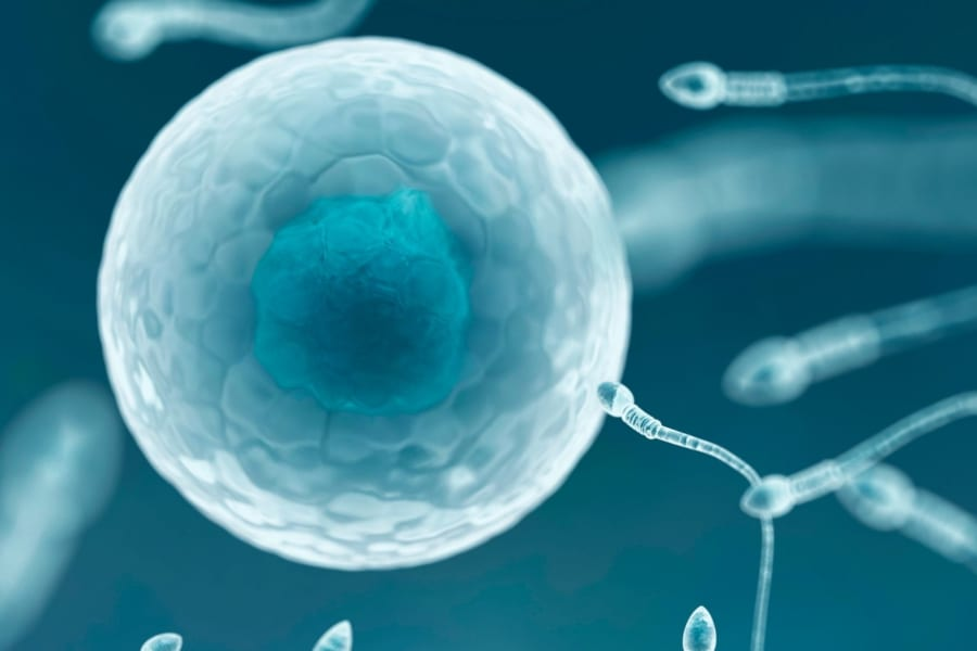 サルの万能細胞から「受精能力がある精子」の作成に成功!