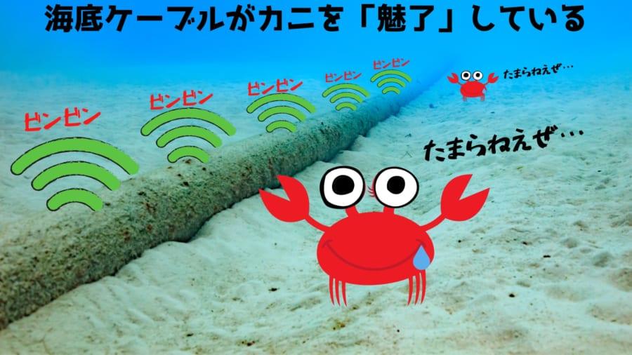 海底ケーブルが「カニを誘惑している」と明らかに