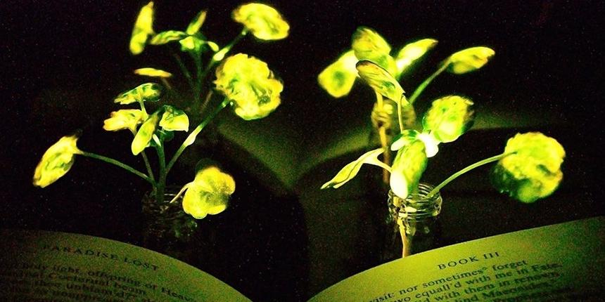 ナノ粒子を埋め込んで植物に発光能力を持たせる