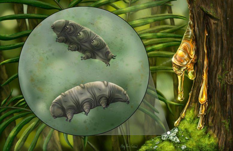 1600万年前の琥珀中に「新種クマムシ」を発見 さすがに死んでる?